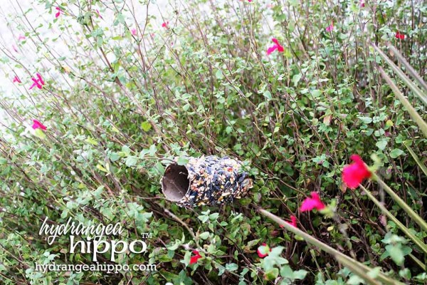 Bird-Seed-Rolls-Jennifer-Priest-Hydrangea-Hippo-Saturday-Morning-Crafts