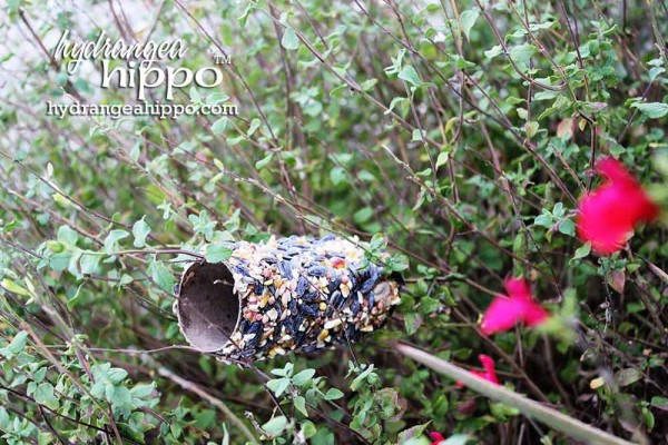 Bird-Seed-Rolls-Jennifer-Priest-Hydrangea-Hippo-Saturday-Morning-Crafts2