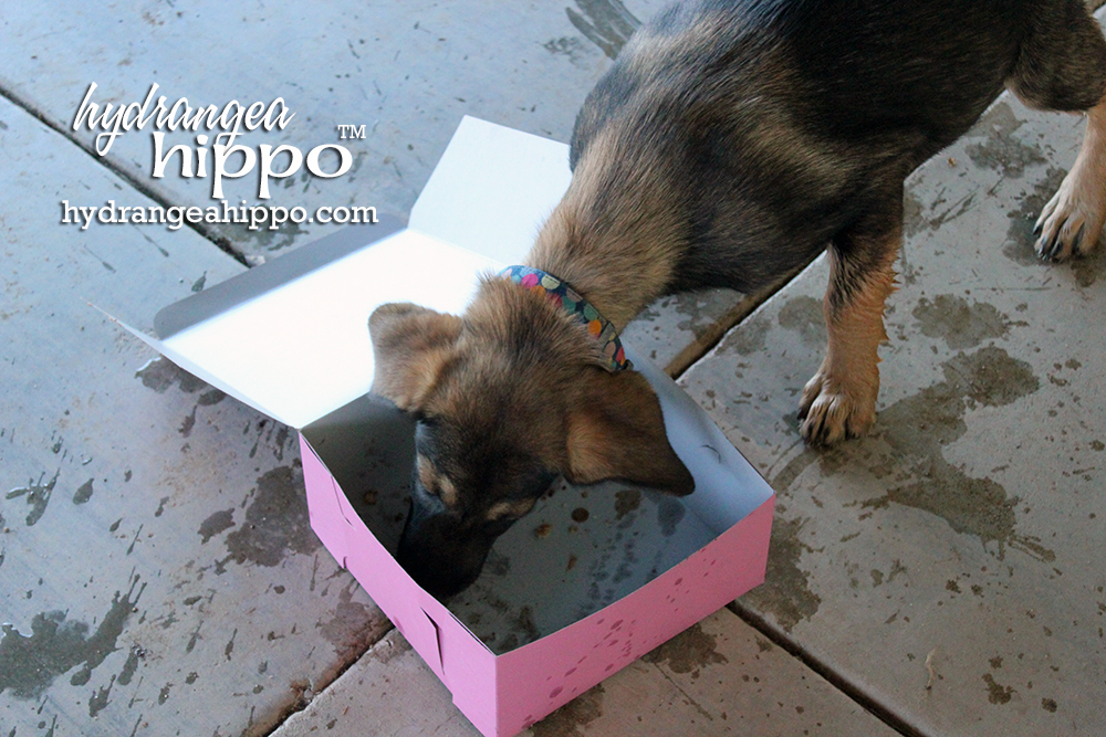 Dog-With-Donut-Hydrangea-Hippo2
