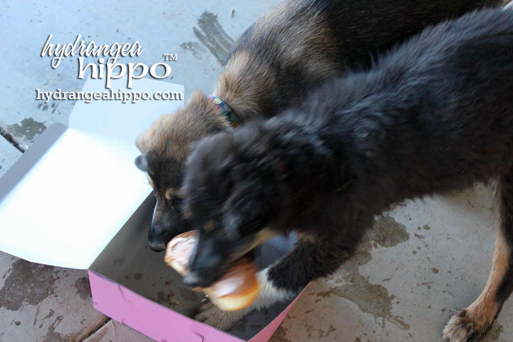 Dog-With-Donut-Hydrangea-Hippo3