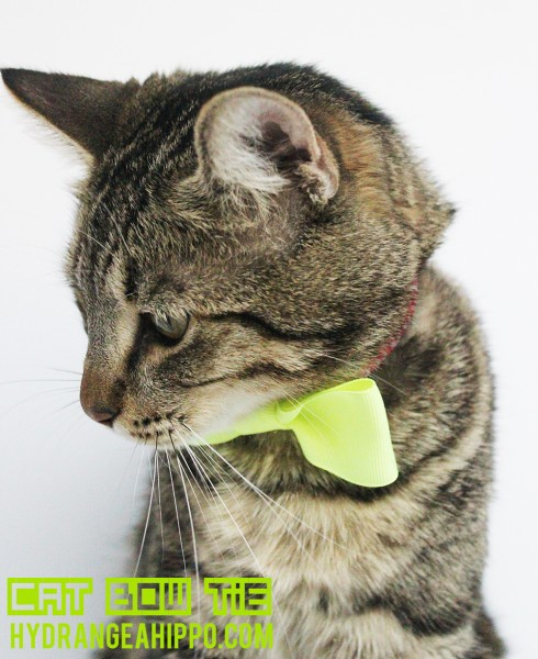 Cat-Bow-Tie-Hyrangea-Hippo-March-2014-2