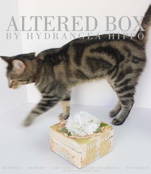 Cat-Model-Marshmallow-with-Box-logo-1000