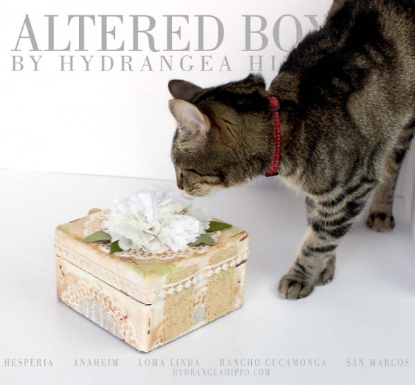 Cat-Model-Marshmallow-with-Box-logo-Smelling-Flower-1000