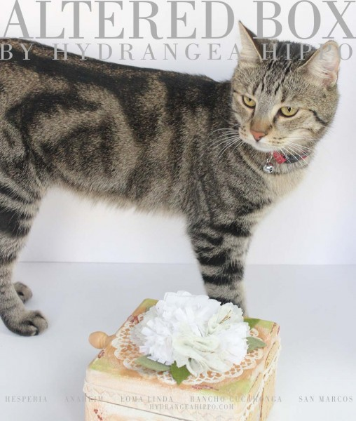 Cat-Model-Marshmallow-with-Box-logo-Sultry-Cat-Face-1000