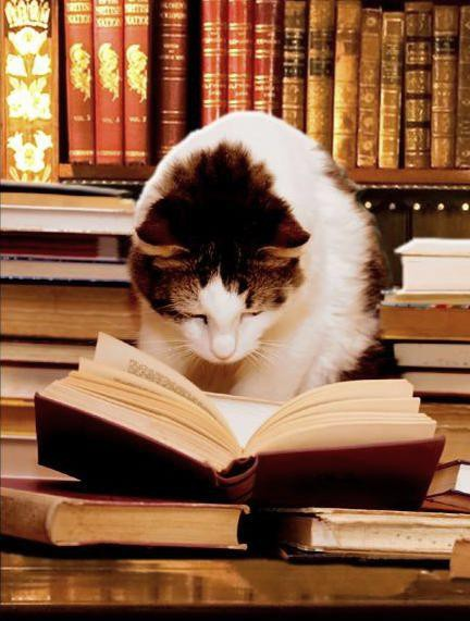 16199-cat_reading_book_5_9_2012
