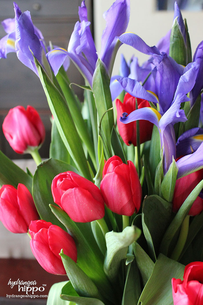 Closeup of Tulip and Iris from ProFlowers Valentine Arrangment - Affordable way to decorate for a romantic affair