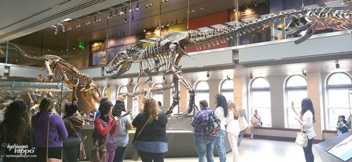 Natural History Museum 4 TRex JPriest