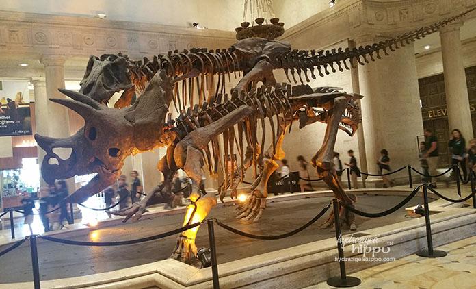 Natural History Museum Dinosaurs JPriest